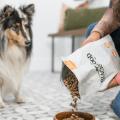 blackwood dog food