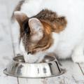 murdochs pet food