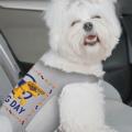 national dog day vests