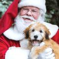 petsmart photo with santa